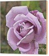 Pink Rose In Israel Wood Print