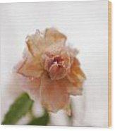 Pink Rose In Snow Wood Print