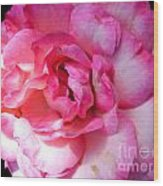 Rose With Touch Of Pink Wood Print