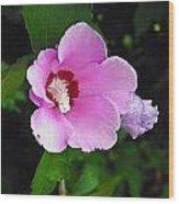 Pink Rose Of Sharon 2 Wood Print