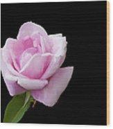 Pink Rose On Black Wood Print