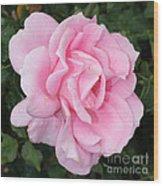 Pink Rose Square Wood Print