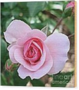 Pink Rose - Square Print Wood Print