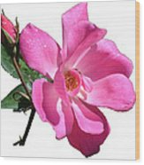 Pink Rose With Bud Wood Print