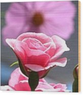 Pink Rose With Cosmo Wood Print