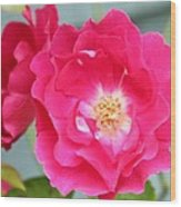 Pink Roses Wood Print by Cathie Tyler