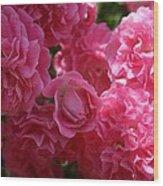 Pink Roses In Sunlight Wood Print