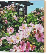 Pink Roses Near Trellis Wood Print