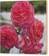 Pink Roses White Picket Fence Wood Print