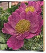 Pink Row Wood Print