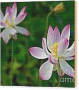Pink Sacred Lotus Wood Print