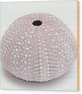 Pink Sea Urchin White Wood Print