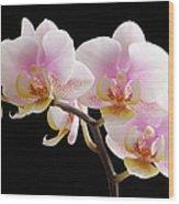 Pink Sensations Wood Print