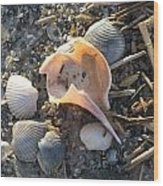 Pink Shell Bowl Wood Print