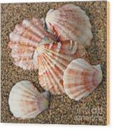 Pink Shells Wood Print