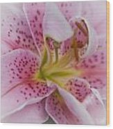 Pink Spotted Lily Wood Print