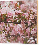 Pink Spring Apple Blossoms Wood Print