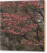 Pink Spring - Dogwood Filigree And Lace Wood Print by Georgia Mizuleva