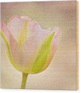 Pink Spring Dreams Wood Print