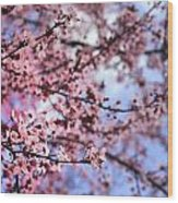 Pink Spring Wood Print