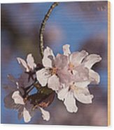 Pink Spring - Sunlit Blossoms And Blue Sky - Vertical Wood Print