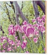 Pink Spring Tulips-light Wood Print