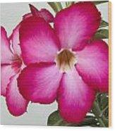Pink Star Flower Wood Print