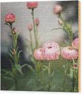 Pink Straw Flowers After A Light Rain Wood Print