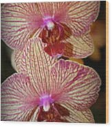 Pink Striped Orchids Wood Print