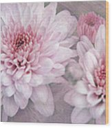 Pink Sugar Wood Print
