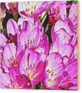 Pink Summer Blossoms Wood Print