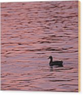 Pink Sunset With Duck In Silhouette Wood Print by Marianne Campolongo
