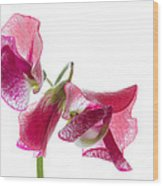 Pink Sweet Pea 2 Wood Print
