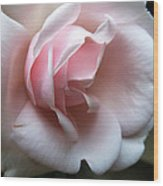 Pink Wood Print by Tanya Jacobson-Smith