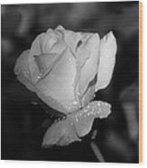 Pink Tea Rose 02 - Infrared Wood Print