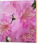 Pink Thunbergia Wood Print