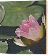 Pink Tilt... Wood Print