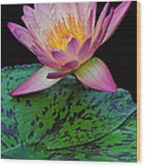 Pink Tipped Beauty Wood Print