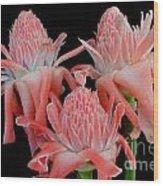 Pink Torch Ginger Trio On Black Wood Print