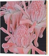 Pink Torch Ginger Trio On Black - No 2 Wood Print