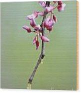 Pink Tree Flower Buds Wood Print