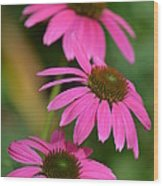 Pink Trifecta Wood Print