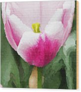 Pink Tulip - A Digital Painting Wood Print