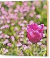 Pink Tulip Close-up Wood Print
