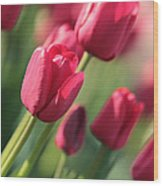 Pink Tulip Dream Wood Print