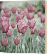 Pink Tulip Field Wood Print