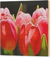 Pink Tulips In A Row Wood Print