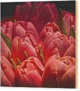 Fucshia Tulips Wood Print