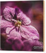 Pink Violet Glory Wood Print