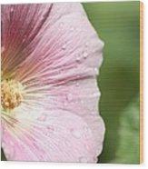 Pink Water Droplets Wood Print